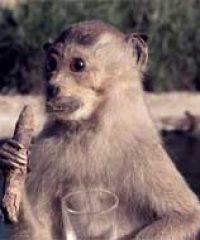 Smoking Monkey Antiques